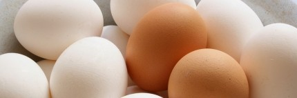 Eggs - cooking & storage