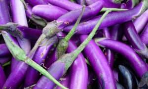 Japanese - eggplant dish