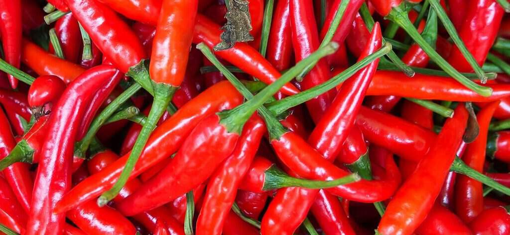All about Chili Peppers