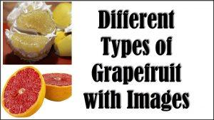 Types of Grapefruit