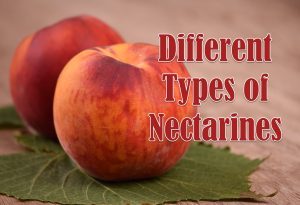 types of nectarines