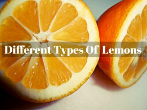 Types of Lemons